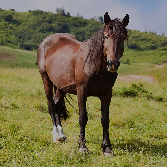 550x550_horse_