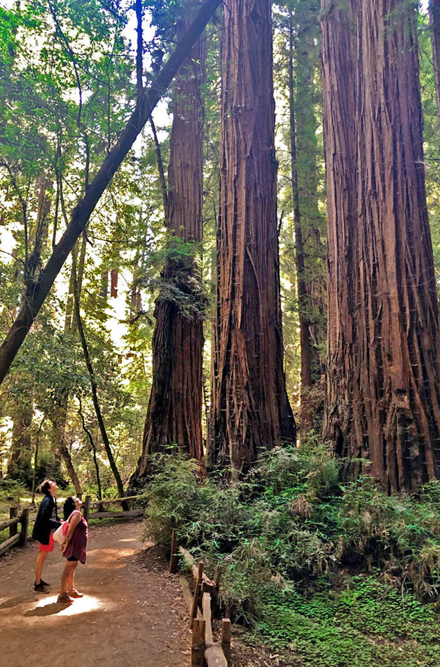 Redwoods National and State Park